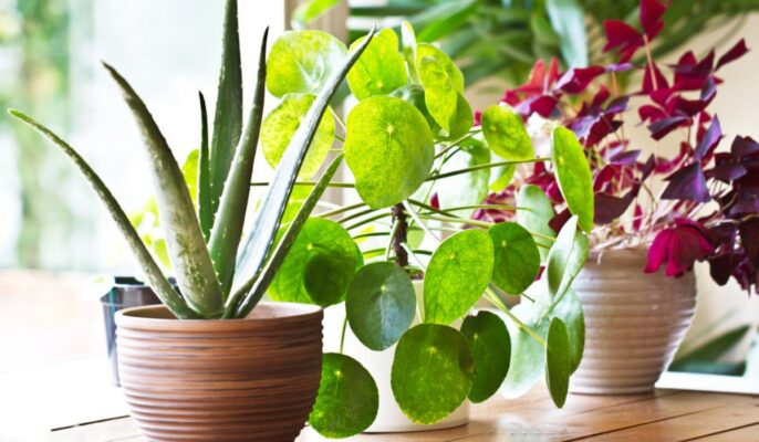 5 things you need to know about plants and their greenery